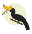 cartoon hornbill bird vector image