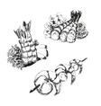Seafood Shrimps vector image