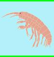amphipoda vector image