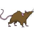 wild rat vector image vector image