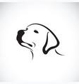 a dog headlabrador retriever on white vector image