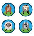 farm animals Horse sheep goat a donkey on the vector image