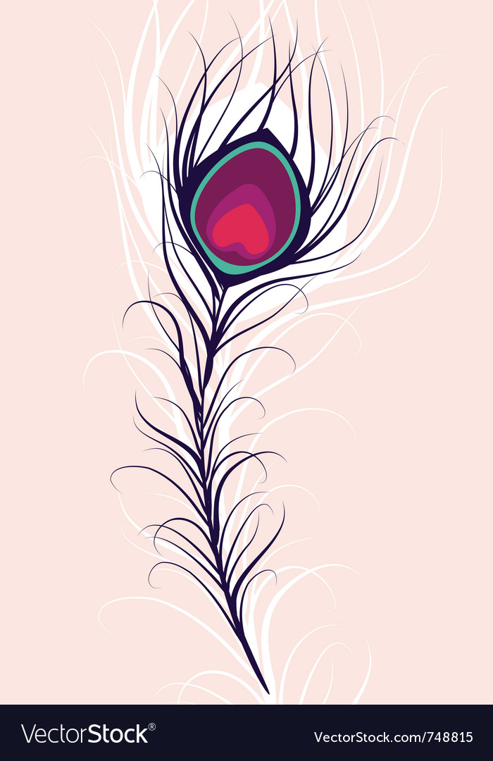Beauty peacock feather vector
