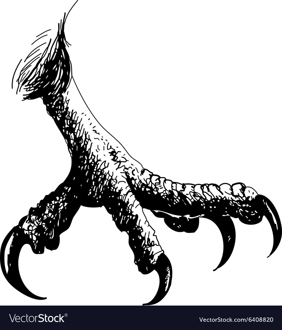 Claws vector