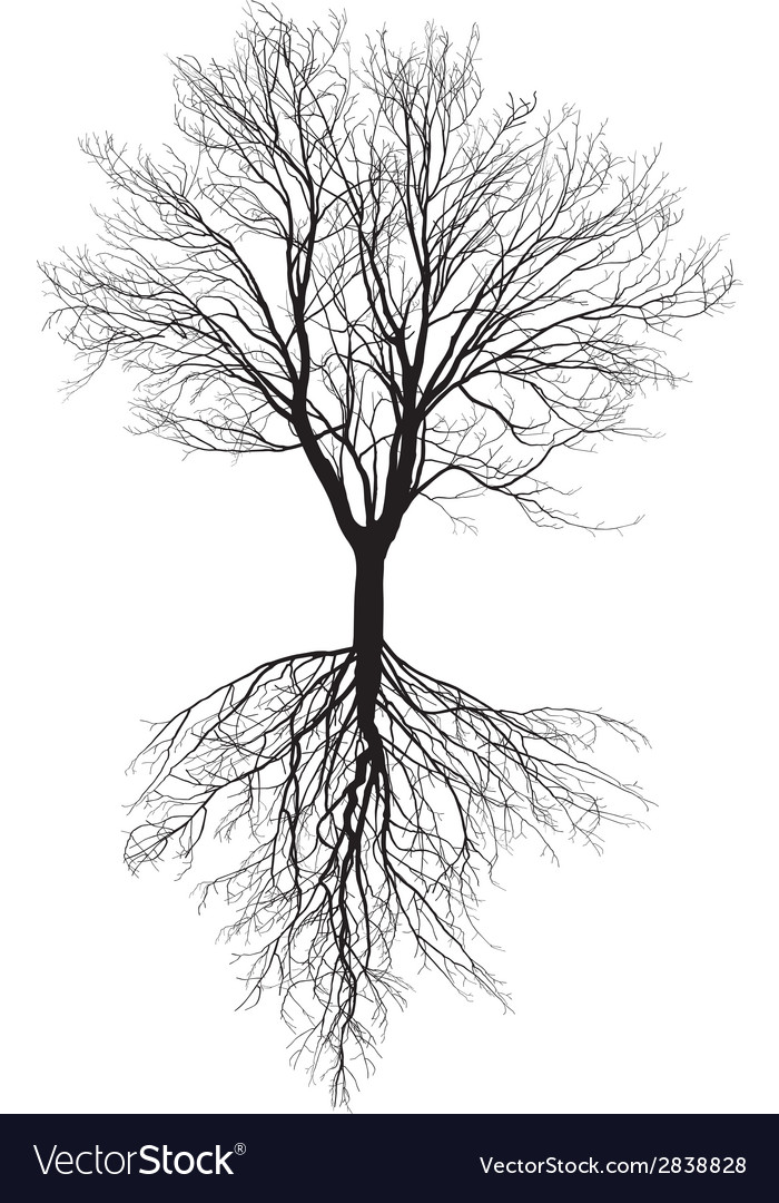 Bare tree with roots vector