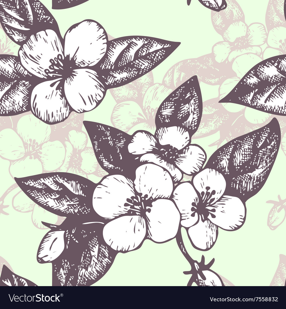 Seamless pattern with jasmine flowers vector