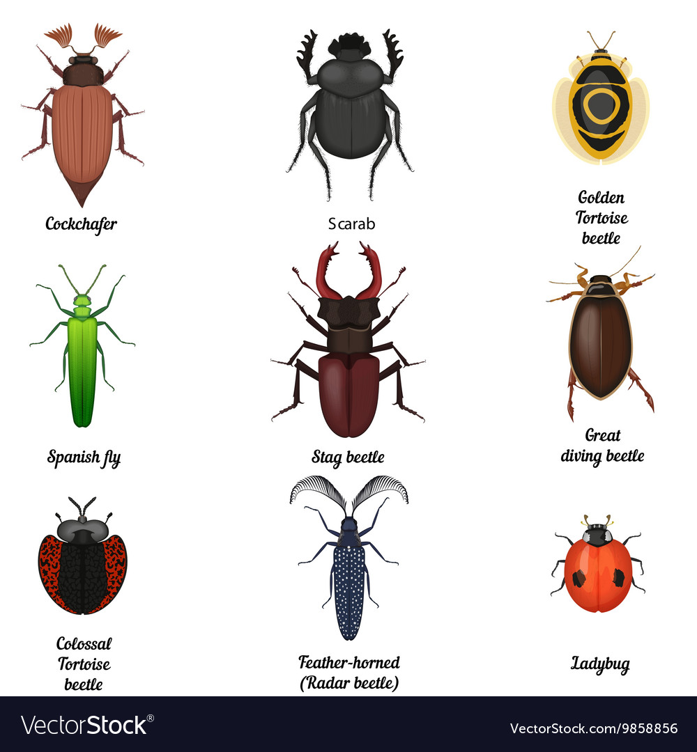 Insect icons set beetle bug icon entomological vector