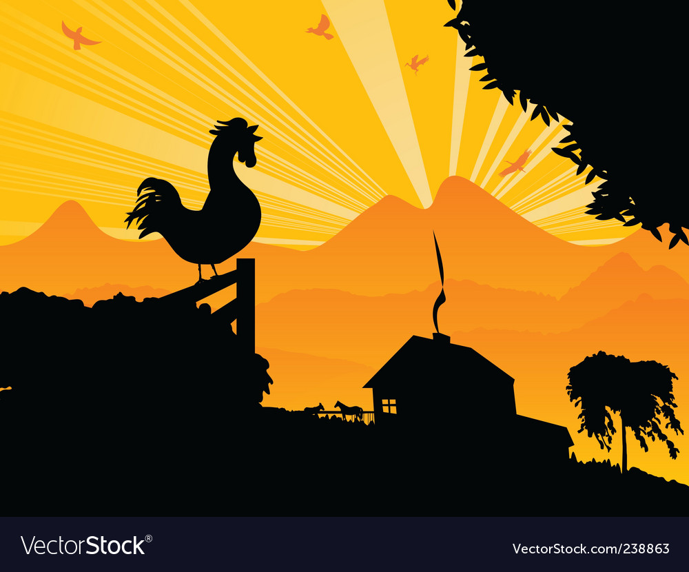Morning rooster vector