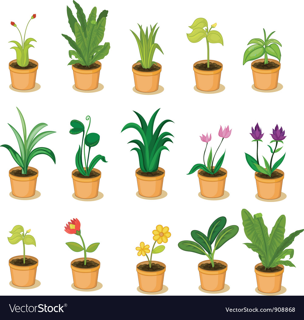 Plant collection vector