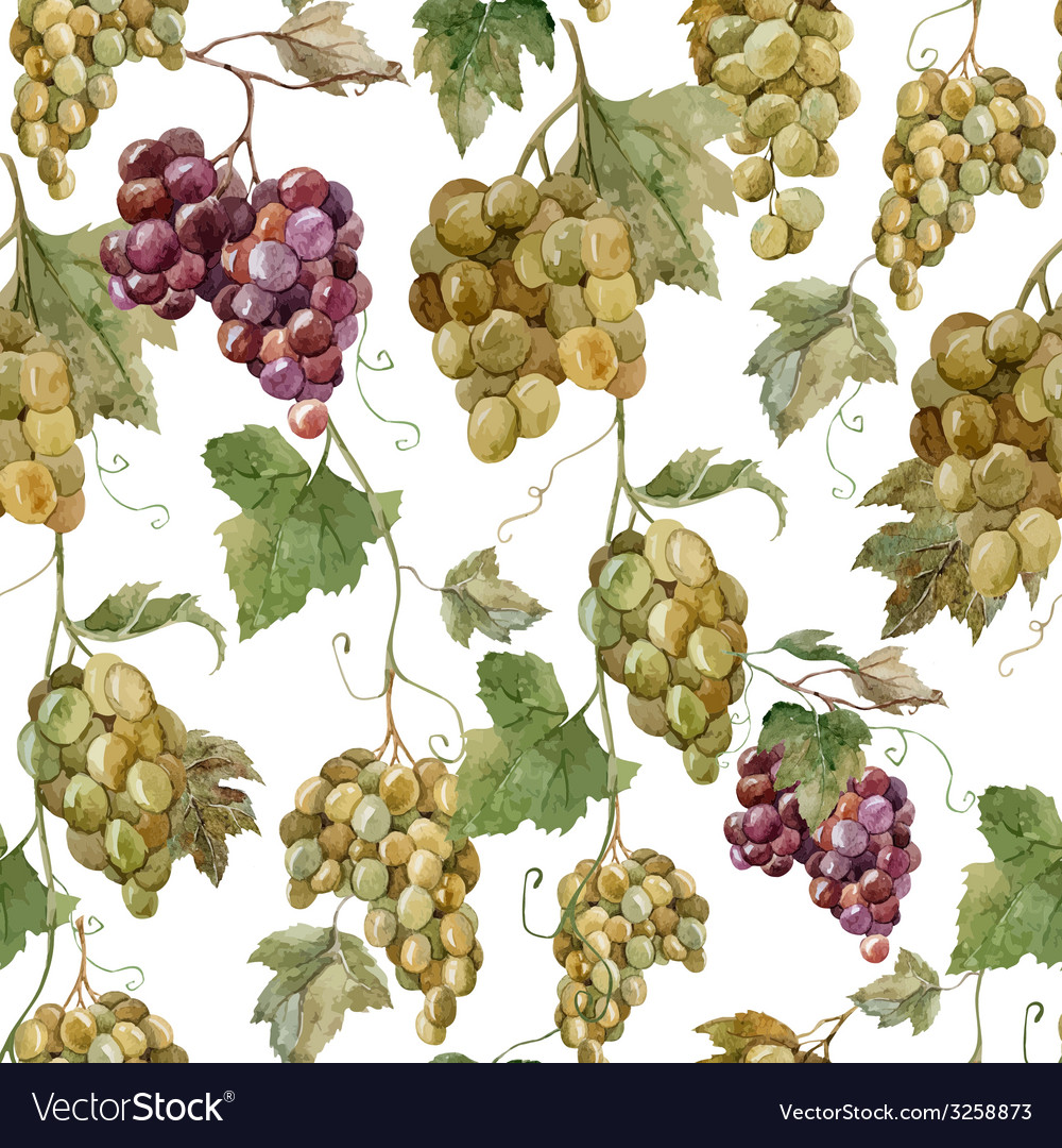 Pattern grapes3 vector