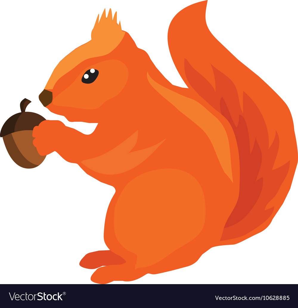 Squirrel acorn vector