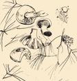 sketch mushrooms vector image