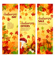 autumn sale banner set of fall leaf and pumpkin vector image