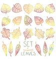 Collection colourful autumn leaves isolated vector image