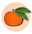 Hand drawn tangerine with green leaves vector image