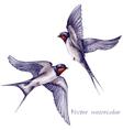 Swallows watercolor vector image