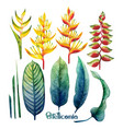 watercolor heliconia collection vector image