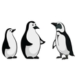 emperor penguins vector image