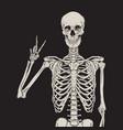 human skeleton posing over black background vector image