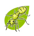 colorful hand drawn of ant vector image