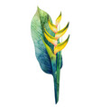 Watercolor heliconia bouquet vector image