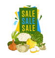 discount sale poster with fresh vegetable vector image