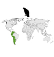 Andean Condor distribution vector image