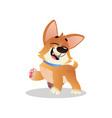funny corgi walking with happy muzzle cartoon dog vector image