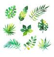 tropical leaves set jungle trees botanical vector image vector image