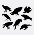 eagle falcon hawk bird animal silhouette vector image