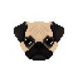 Mops dog head in pixel art style vector image
