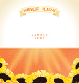 Harvest season with sunflowers vector image vector image