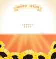 Harvest season with sunflowers vector image