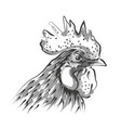 line sketch rooster head vector image