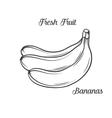 Hand drawn bananas icon vector image