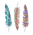 set of bright feathers vector image