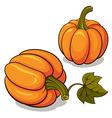 Ripe Pumpkins vector image