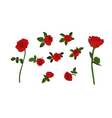 red rose set vector image