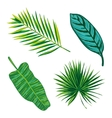 Tropical Leaves Collection Isolate vector image