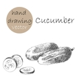 Hand Drawn cucumber Monochrome sketch vector image