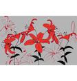 lilii vector image