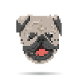 Pug portrait abstract isolated vector image