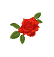 Scarlet rose vector image