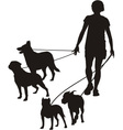Female and four dogs vector image