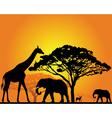 african safari silhouette vector image