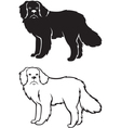 Contour and silhouette of Newfoundland dog vector image vector image