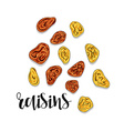 Raisins isolated object sketch Spice for food vector image