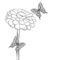 beautiful black-and-white flower with butterflies vector image