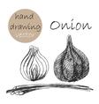 Hand Drawn onion Monochrome sketch vector image