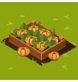 Vegetable Garden Box with Pumpkin Set 8 vector image
